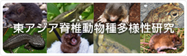 バナー:東アジア脊椎動物種多様性研究
