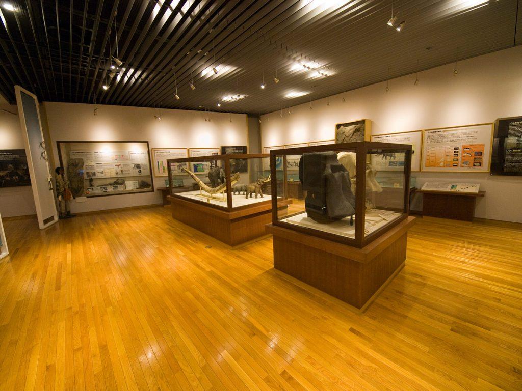化石展示室